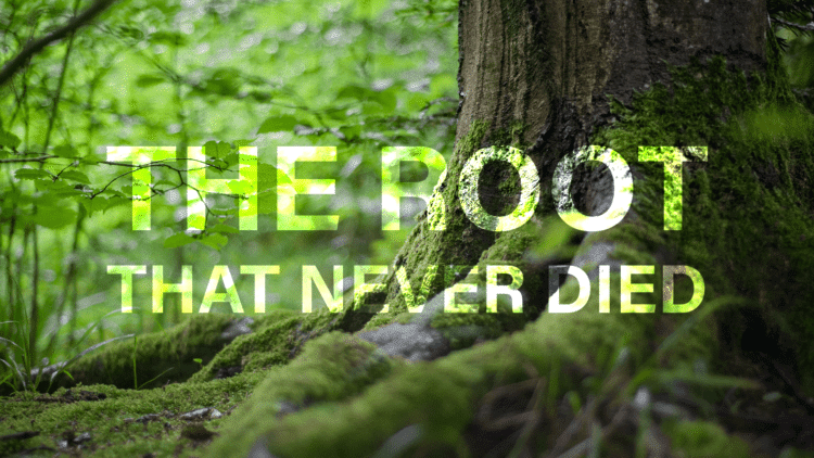 The Root That Never Died Book Trailer